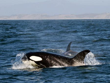 whale01-450
