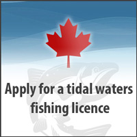 get_fishing_licence200