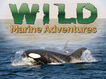 Wild Marine Adventures